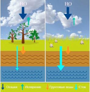 Российские ученые выяснили, что промышленные рубки лесов меняют гидрологический режим сибирских рек
