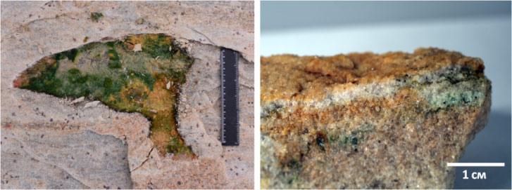 Российские учёные предложили теорию появления почв
