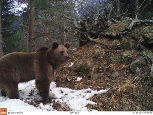 Всемирный день дикой природы – 3 марта